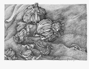 gradated garlic