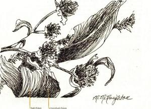Textural drawing